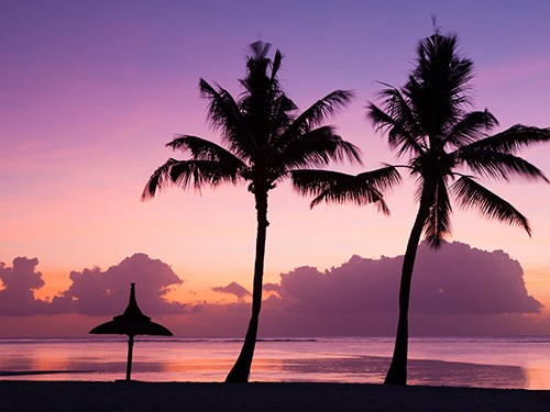Palm trees on the beach in Mauritius