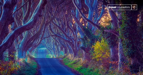 Kingsroad (Dark Hedges, County Antrim)